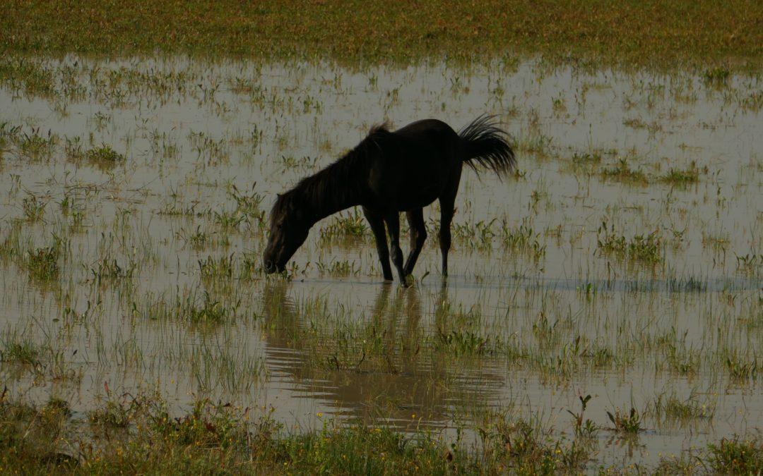 Tra i cavalli selvaggi in cerca della Visione