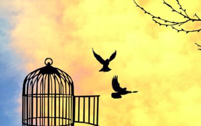 Delinear: libera tus ojos de la jaula