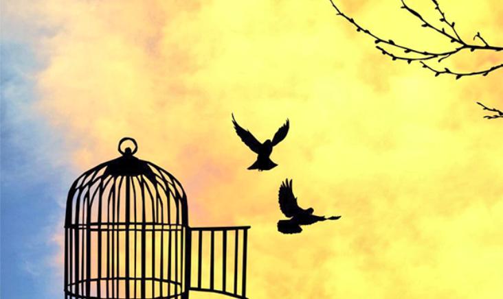 Delineare = occhi liberi dalla gabbia