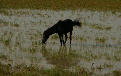 Tra i cavalli selvaggi cercando la Visione